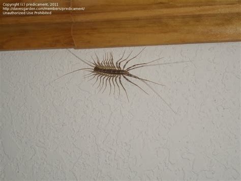 jumping insects in basement basement bugs images frompo 1