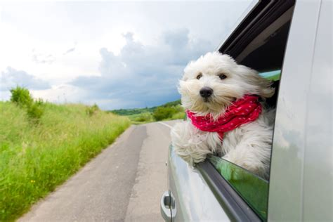 car anxiety tips for dealing with car anxiety canna pet 174
