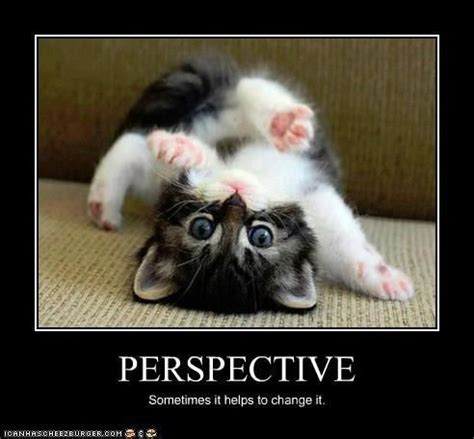 Perspective Meme - perspective funnyanimalslol funny or cute pet memes