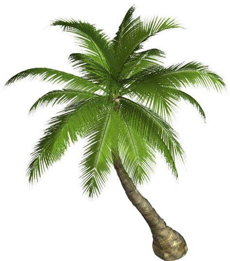 palm tree h