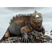 Cool Animals Pictures  Galapagos Island Natural