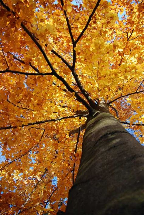 november images november by pascoli translated by geoffrey brock
