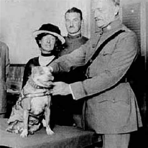 Is Sgt Stubby Real Sgt Stubby Pit Bull Terrier Pedegru