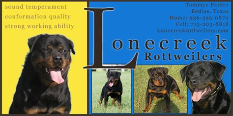 rottweiler puppies mississippi rottweiler breeders mississippi dogs in our photo