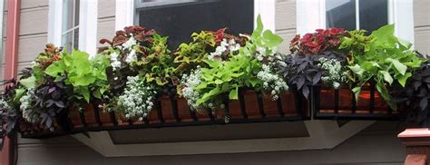 best flowers for window boxes best plants for shade container gardening