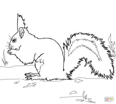 coloring page of a gray squirrel red squirrel coloring page free printable coloring pages