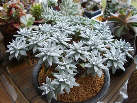 facts about succulents succulent plant information 09 sep 2013