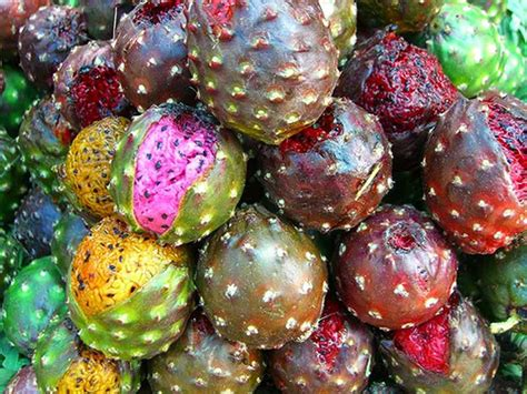 studio marcy marcy lamberson have you seen these pitaya fruit
