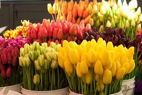 tulipano fiore significato significato tulipano significato fiori il