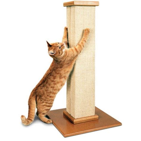 How To Get Cats To Stop Scratching Furniture by Paws To Doors Pet Boutique 187 Cats Scratching On