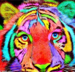 colorful tiger colorful tiger colorful animals tigers