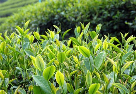 heimische pflanzen für den garten 214 kologisch g 228 rtnern obi ratgeber
