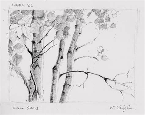 aspen tree drawings v vaughan s small works august 2010