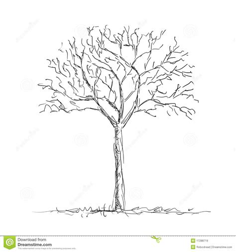 lone tree coloring page bare tree royalty free stock images image 17288719