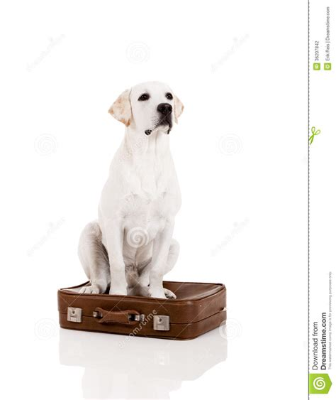 puppy suitcase with a suitcase stock photography image 36207842