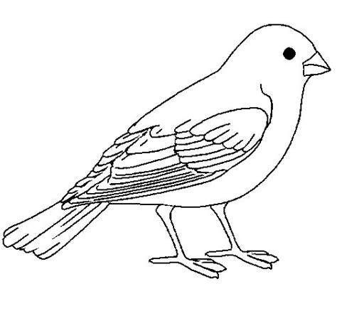 sparrow coloring page coloringcrew com