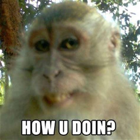 Monkey Meme - poor monkey by borntobefeatured meme center