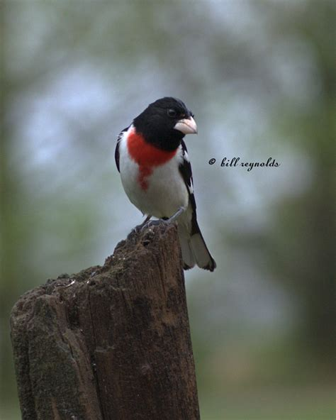 minnesota seasons minnesota birds
