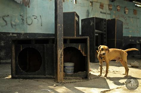 soundproof dog house speaker dog house in kingston jamaica sound system documentary pr