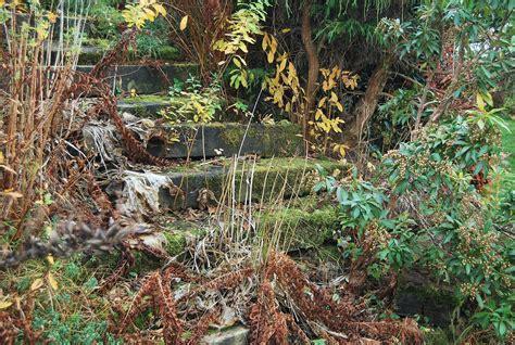 treppe im garten alte treppe im garten foto bild pflanzen pilze