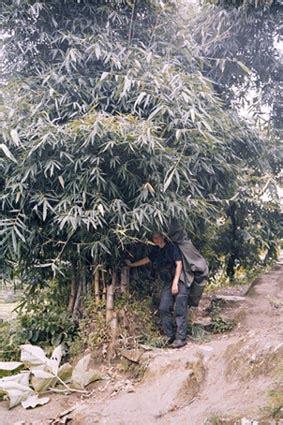 Bambus Wuchert Was Tun by Www Gritlory De Fotogalerie Nepal
