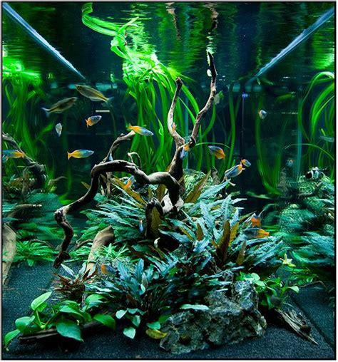 aquarium design with black sand nice freshwater planted tank aquarium design and fish