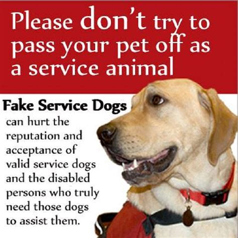 service dogs florida passing service becomes a crime in florida animal salvation