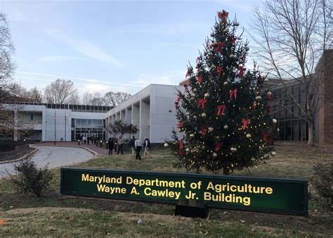 christmas trees u cut md maryland department of agriculture encourages residents to buy fresh locally grown trees
