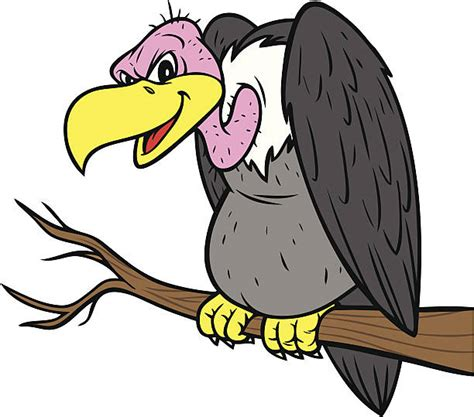 Picture Illustration | royalty free vulture clip art vector images