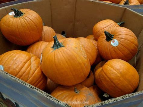 Jumbo Pumkin jumbo pumpkins