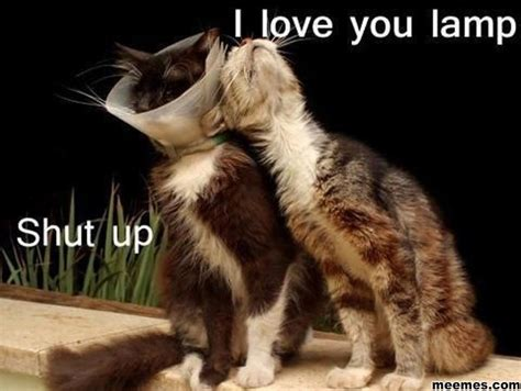 Most Hilarious Animals by Most Animal Memes And Humor Pics Quotes And Humor