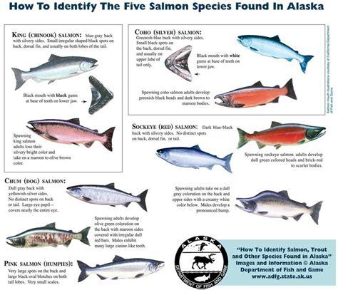 jetski 2e hands best 25 salmon species ideas on pinterest steelhead