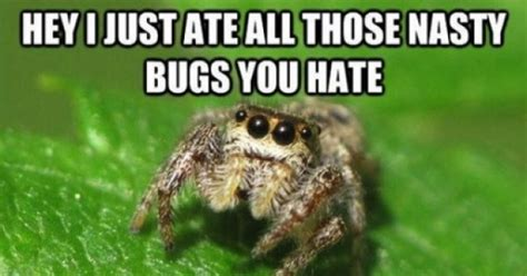Sad Spider Meme - image gallery sad spider