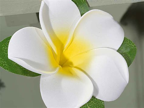 fiori frangipane ghirlanda fiori frangipane artificiali lattice da