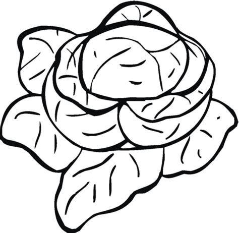 Lettuce 9 Coloring Page Supercoloring Com Lettuce Coloring Page