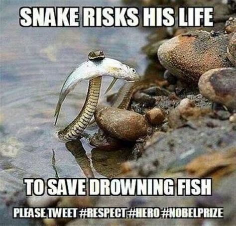 Snake Meme - meme snake fish blog sarcasm random dorkery