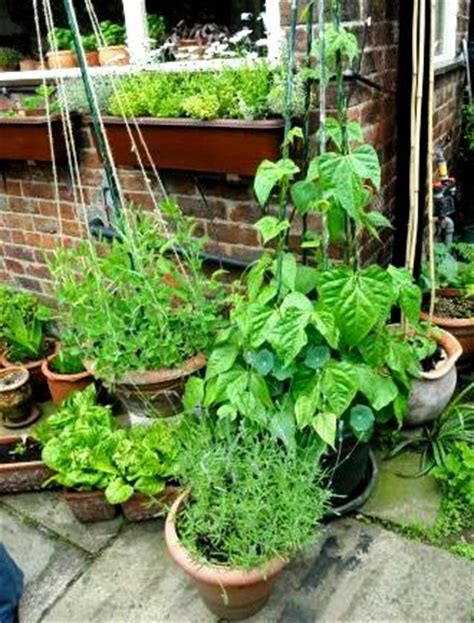 vegetable garden in pots container vegetable gardens growing in pots indoor or