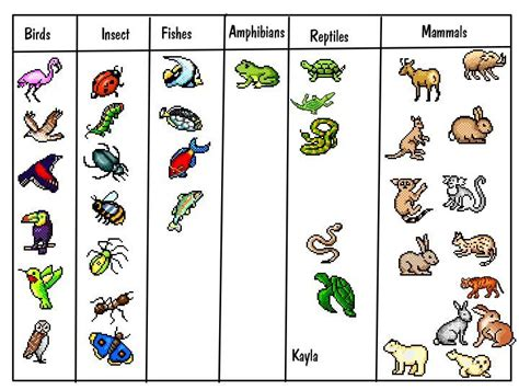 printable animal classification chart best 25 animal classification ideas on pinterest animal