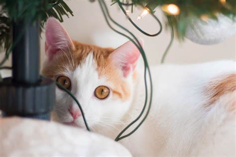 how to keep cats awsy from a christmas tree how to keep your cats away from your tree ambitious