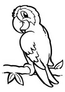 parrot on branch coloring page download amp print online