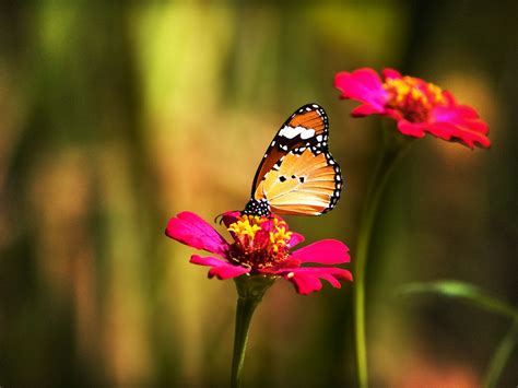 insects and flowers the hd wallpapers flowers wallpaper
