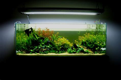 ada aquascape aquatic aquascaping aquarium