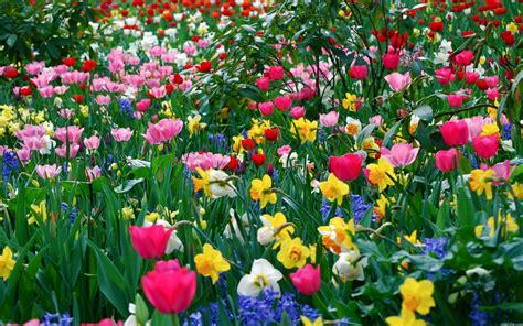 photos of spring flowers spring meadow with beautiful flowers wallpapers and images