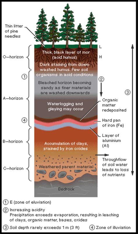 diagram of a soil profile soil profile diagram