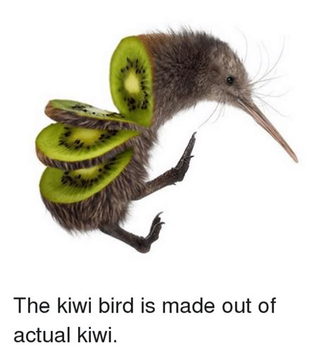 How To Get A Bird Out Of The Garage by 25 Best Memes About Kiwi Bird Kiwi Bird Memes