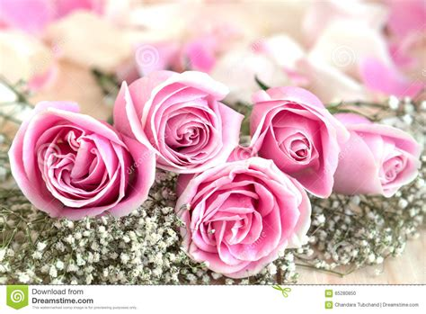 Wedding Anniversary Roses by Pink Roses And Petal For Stock Photo Image Of Bloom