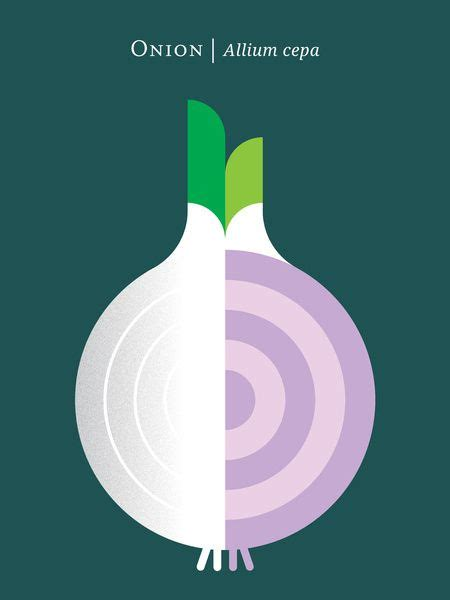 onion cache ela mobi 12 fruit and vegetable posters for foodies fruits and