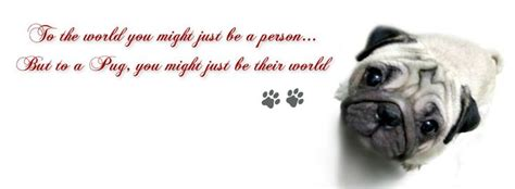 quotes on pugs pug cover photo for your timeline pug quotes pugs n hugs