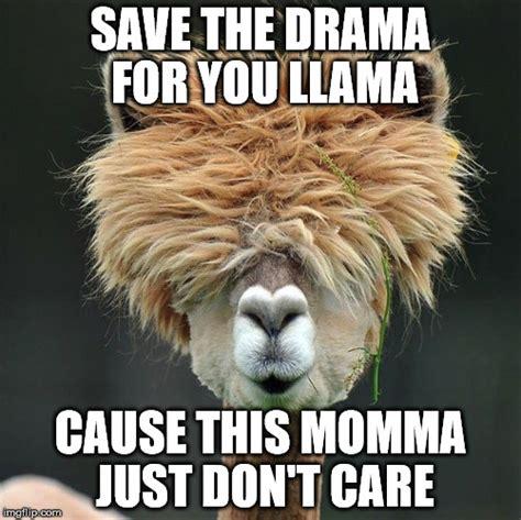 Drama Llama Meme - dramma for your momma imgflip