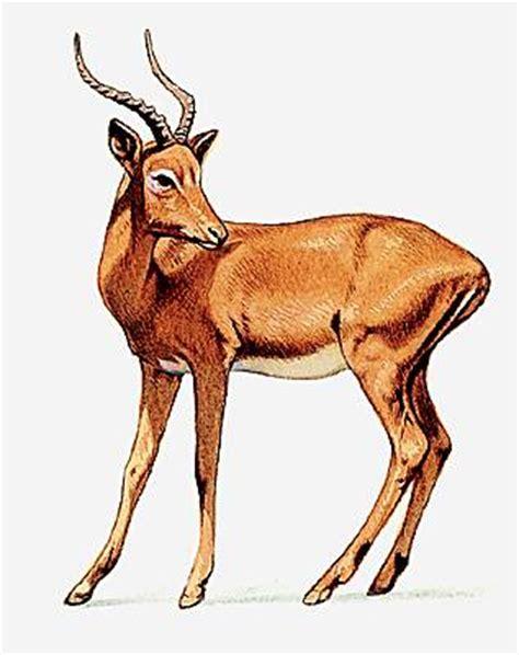 encyclopedie larousse en ligne antilope latin medieval